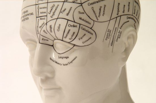 Phrenology head shot against white background. Three quarter view from the front left.Others in Series