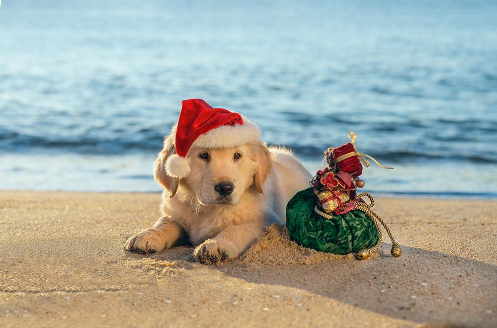 Happy Christmas Dog FINAL